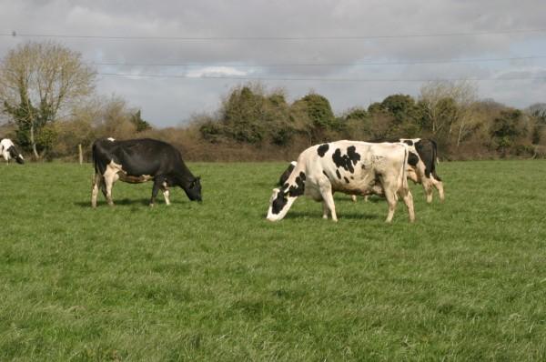 stage en milieu agricole